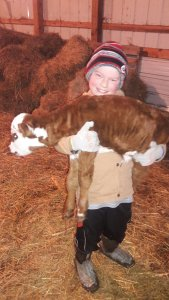 Carrying a baby calf